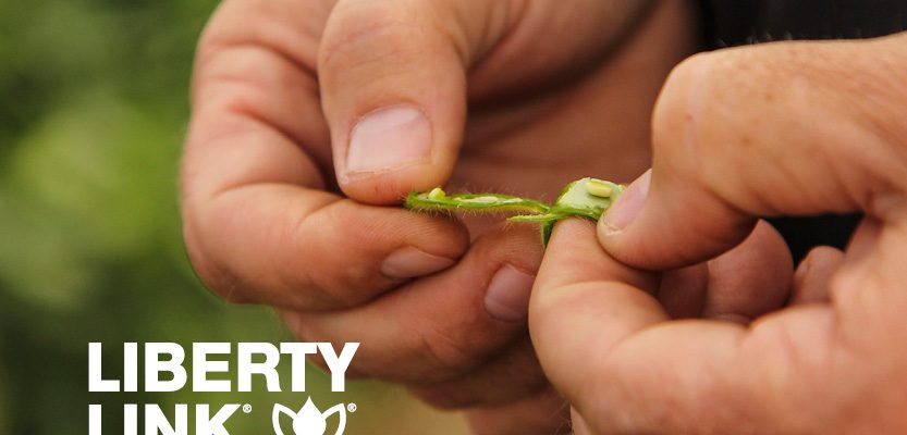 LibertyLink® Soybeans Equal Weed Management