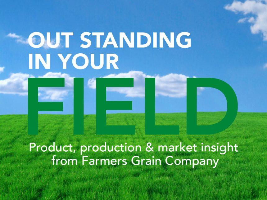 Soybean Market Update